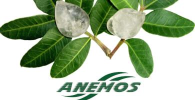 ANEMOS - Προϊόντα Μαστίχας Φωτογραφία 3